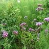 jardin-ens-ete-arnal-f-126.1208974073.jpg