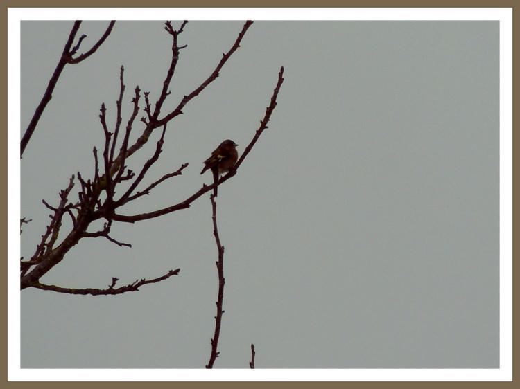 Oiseaux de nos jardins.Images gratuites.
