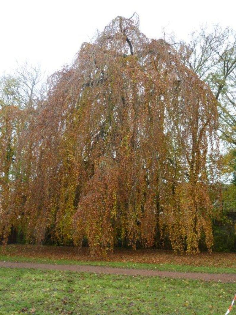 l'arbre pour une pause