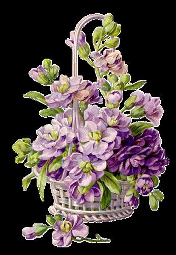 Fleurs Vintage Série 6