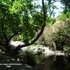 ANDROS : Stenies coin pique nique près d'une rivière