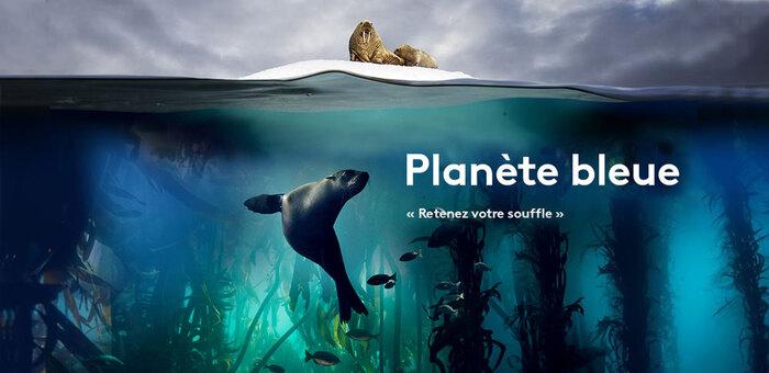 Planète Bleue...L'étonnante Intelligence Des Poissons