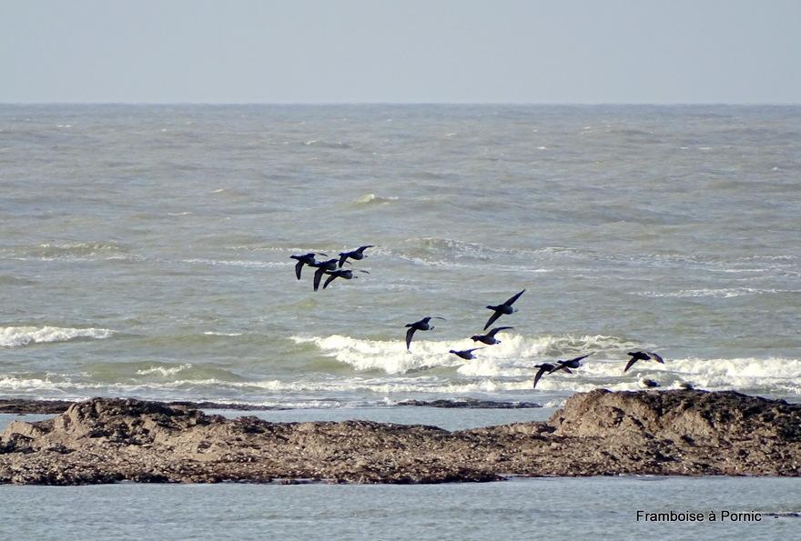 Oiseaux de La Prée - La Plaine sur Mer 44 -