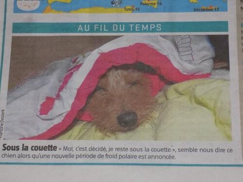 Woopy dans le journal