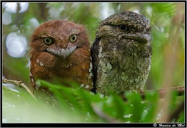 Oiseaux étranges ...