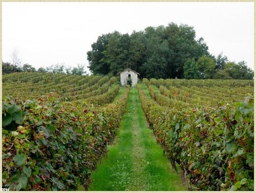 Vignoble Lotois