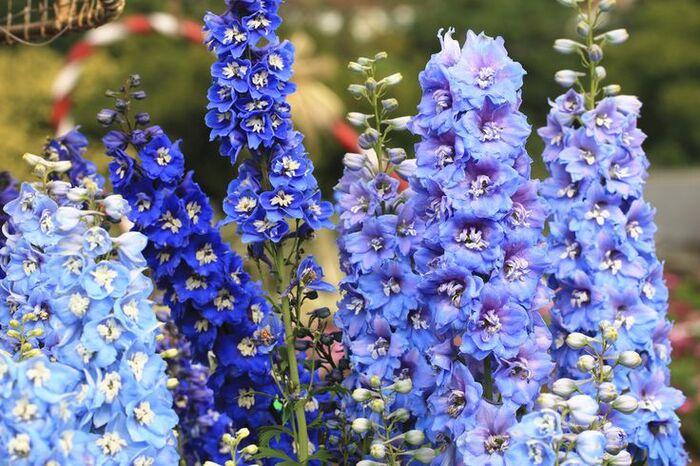 Top 10 des belles fleurs qui transformeront votre jardin