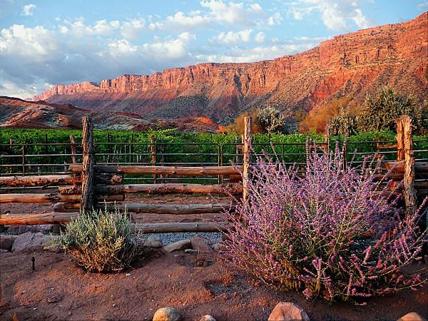 Red Cliffs Lodge Vineyards at sunrise