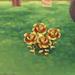 La rose dorée