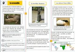 Documentaire sur les crocodiles