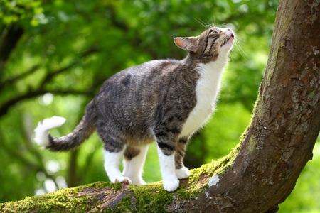Les chats sont de bons chasseurs et doivent bien évaluer la distance qui les séparede leur proie avant de bondir. © Pete Pahham, Shutterstock