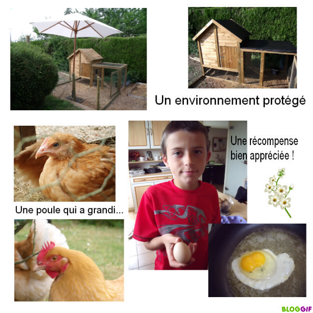 NOS COMPAGNONS ANIMALIERS