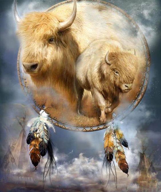 La Prophétie du Bison Blanc