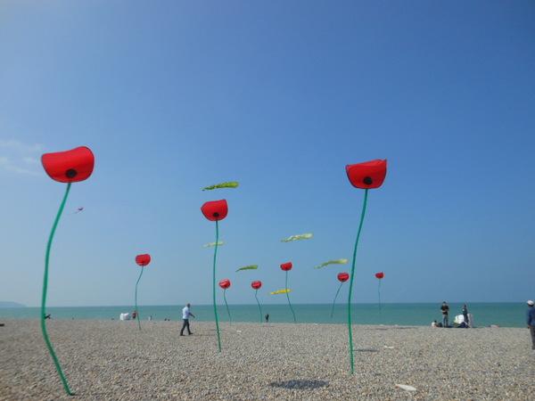Des fleurs sur la plage