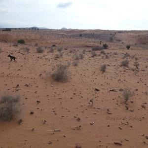 Balade en Dromadaire - Le chien du guide