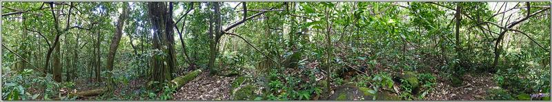 Panorama à 360° dans la forêt autour du Belvédère - Moorea - Polynésie française