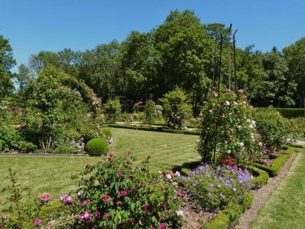 journées de la rose chaalis - juin 2014 - la roseraie 3