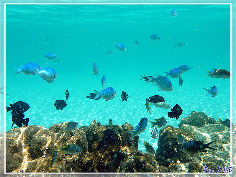 Snorkeling à Nosy Tsarabanjina : Demoiselles - Archipel Mitsio - Madagascar