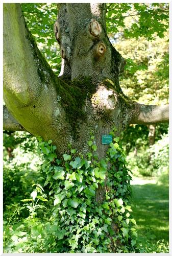 Arboretum de l'Ecole De Breuil. Paris 12ème. Troncs d'arbres