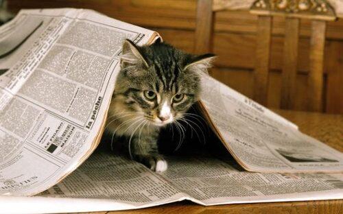 06 - Le chat et le journal