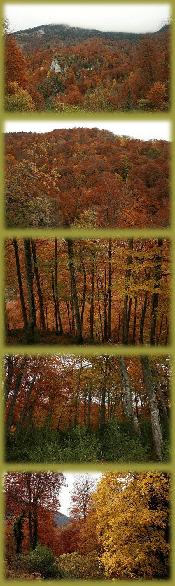 La haute vallée du Job (31 - Haut Comminges) sous les feux d'un automne 2007 flamboyant
