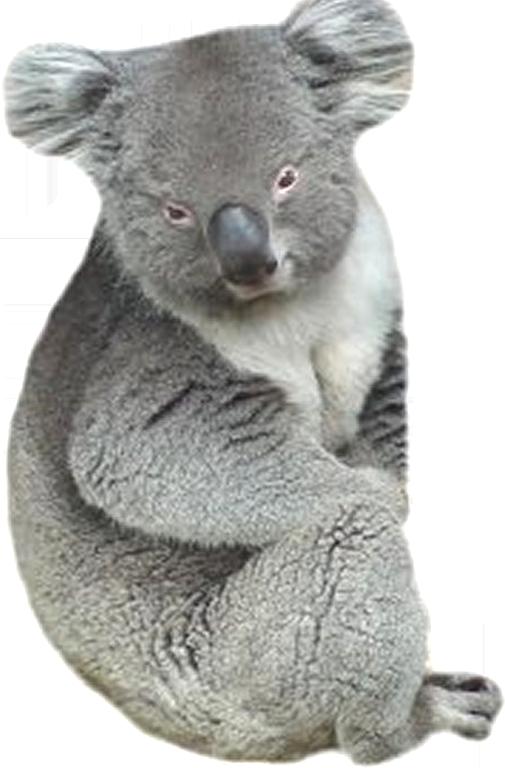 Tube Koala