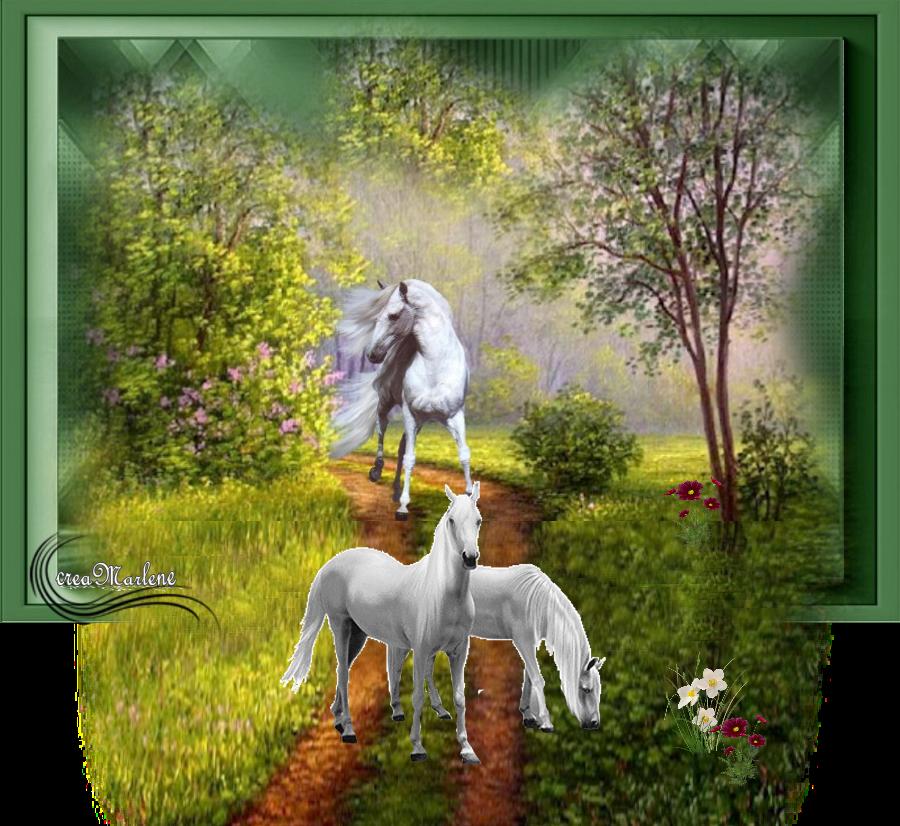 ♥ Les chevaux ♥
