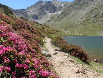 Le même paysage (estany de Casteilla) début Juillet (en 20xx)