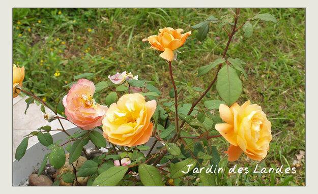 Quelques photos du  jardin...juillet 2018.