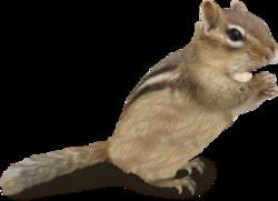 Ecureuils   (1)