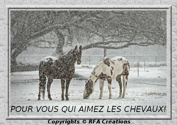 POUR LES AMOUREUX DES CHEVAUX!