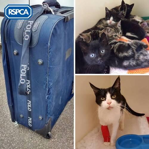 9 chats enfermés dans une valise abandonnée