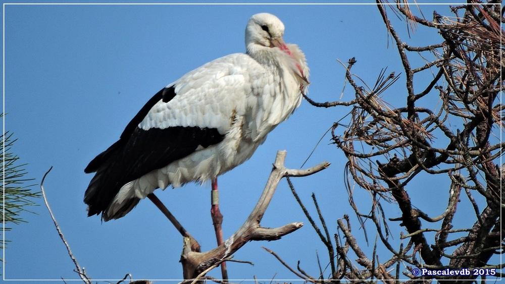 Réserve ornithologique du Teich (mars 2015) -2/8