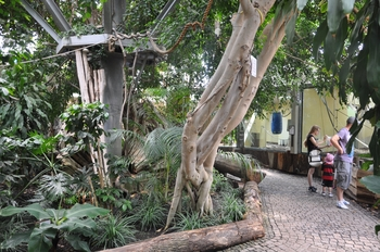 zoo allemagne2 411