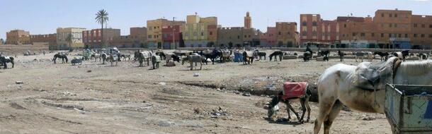 Un parking d'un autre âge au souk à Tissani