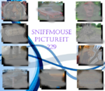 Picture It 229 - Sniffmouse