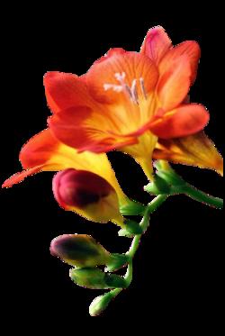 tubes fleur