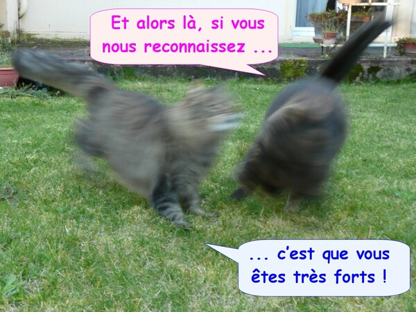 Photos ratées de chats
