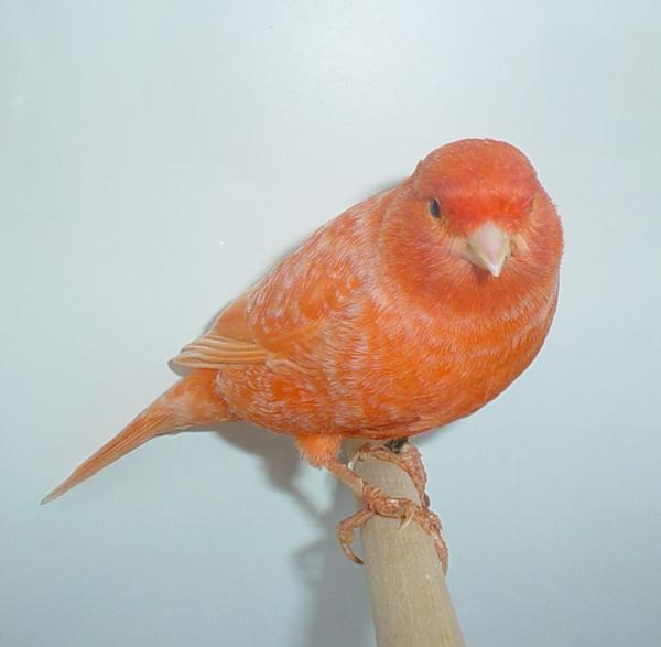 Les protéines dans l'alimentation des oiseaux