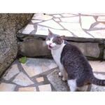 chats trouvés au 29/01/14