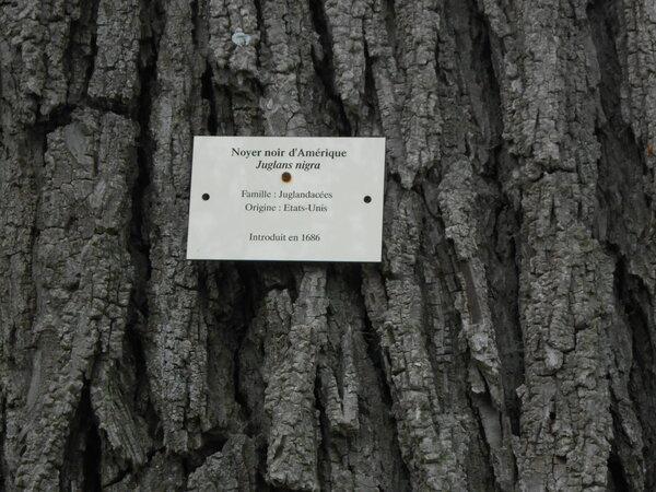 n°304- Un tronc d'arbre-Mildéfis