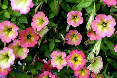 Encore de jolies fleurs ! (2)