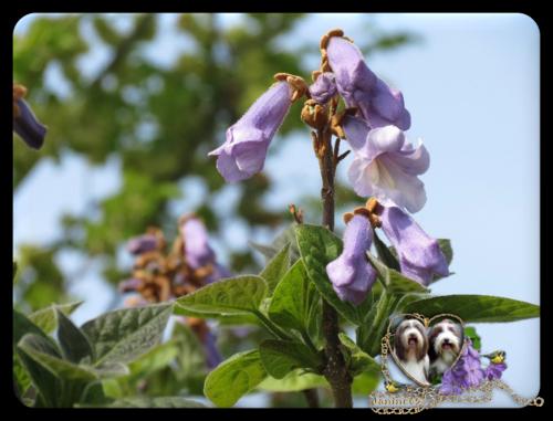 ♥ Le jardin d' Athos & Cheyenne en mai ♥