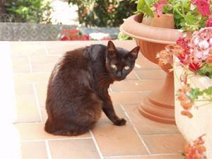 CAT-BIKINI-Terrasse--Small-.JPG