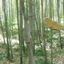 Les Bambous du Mandarin - Zénitude assurée, journée magique ... (Fin mai 2017) - Photo : Mistoufl