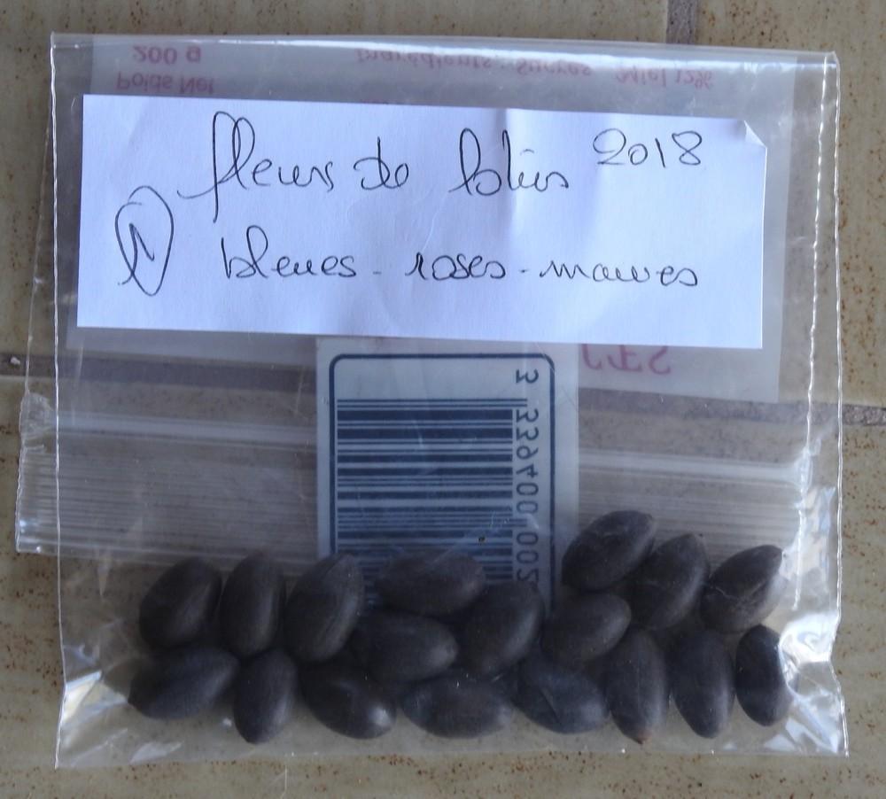 Des graines de lotus envoyées par Françoise...