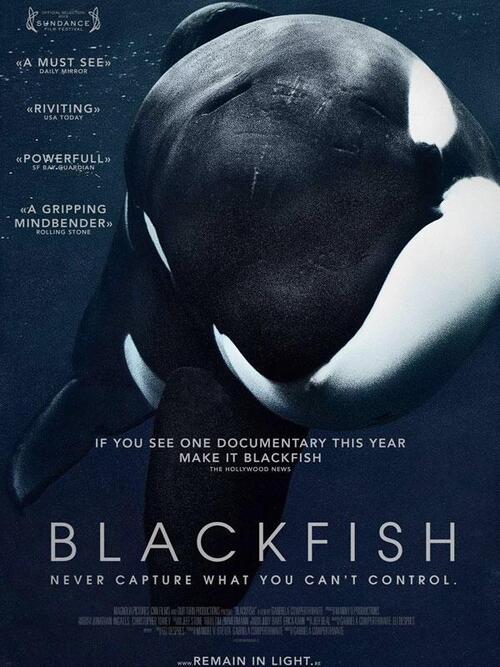 """Bonsoir a l'honneur : """" Blackfish """""""