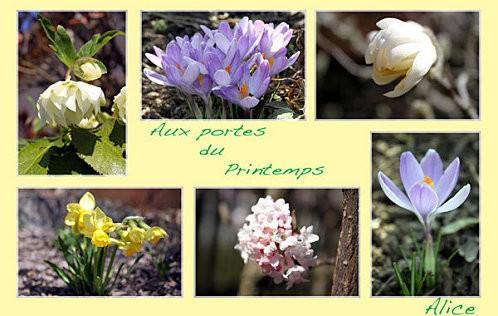 P73-Printemps.jpg