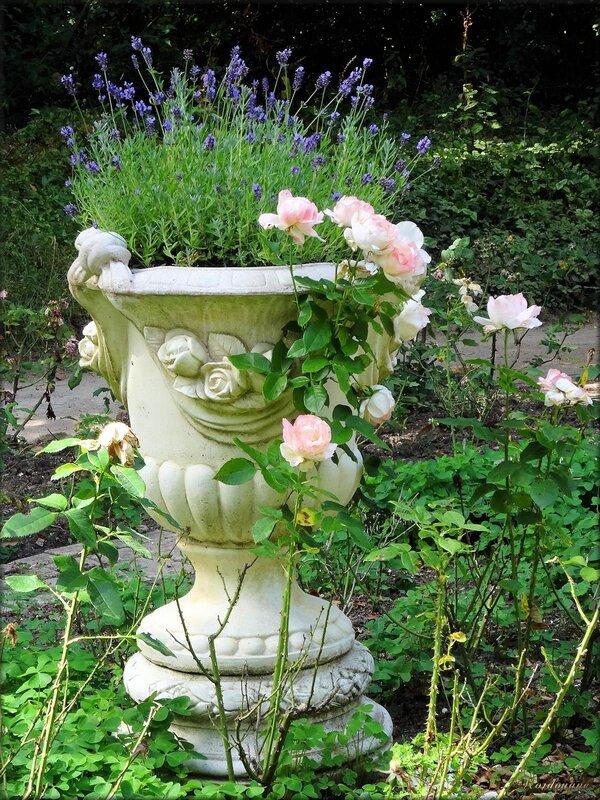 Roseraie du parc floral de la Cour d'Aron