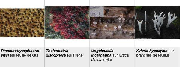 """Une sortie """"pézizes"""" fructueuse par les membres  de la Société Mycologique du Châtillonnais"""